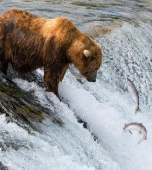 Explore.org empieza a transmitir en vivo desde Alaska