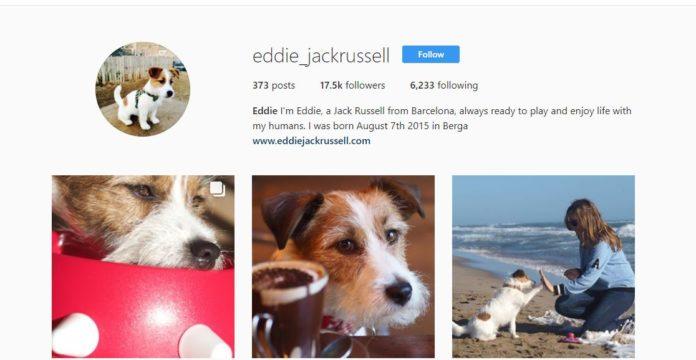 perros redes sociales