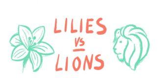 """Colvin lanza la campaña """"Lillies vs. Lions"""" para captar nuevos creativos"""